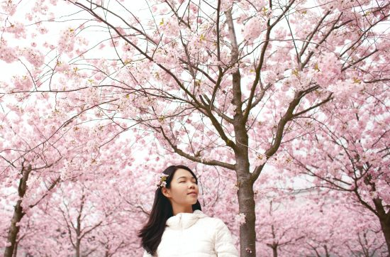 What Can Japanese Cherry Blossoms Teach Us About Acceptance And Change?